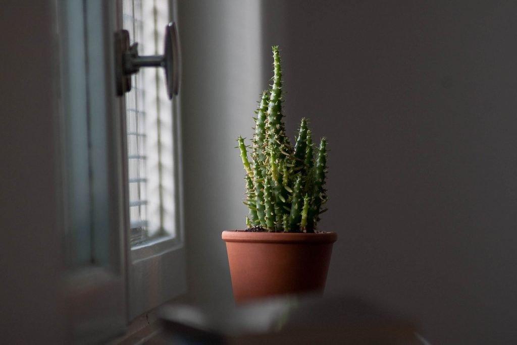 maniglie finestre